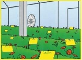 """10 י""""ח מדבקה צהובה גדולה נגד חרקים"""