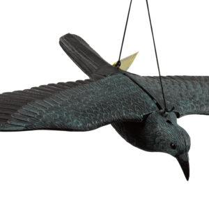 הדחליל המבהיל עורב פרוס כנפיים